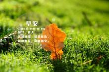 秋天早安文字高清图
