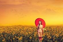 向日葵花海美女唯美写真高清图片