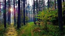 清晨树林树木景观高清图片