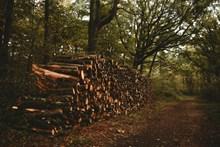 砍伐树木木头高清图