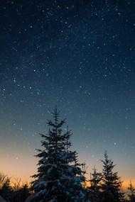 夜晚树木星空图片素材