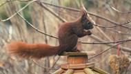 棕色小松鼠觅食图片素材