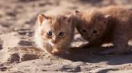 两只可爱宠物猫高清图片