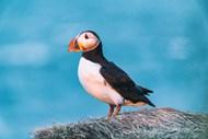 停在石头上的海鸟图片