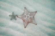 唯美小清新海星精美图片