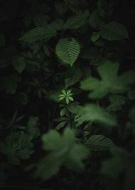 野生绿色植物写真图片下载