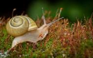 软体小蜗牛图片大全
