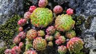 多肉嫩植物盆栽图片