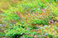 秋季植物叶子图片大全