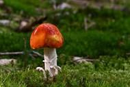 草地面蘑菇朵高清图片