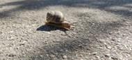 路面小蜗牛爬行图片大全