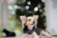 漂亮宠物小狗图片素材