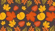 秋天黄树叶背景图片素材