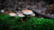 伞状小蘑菇朵图片大全