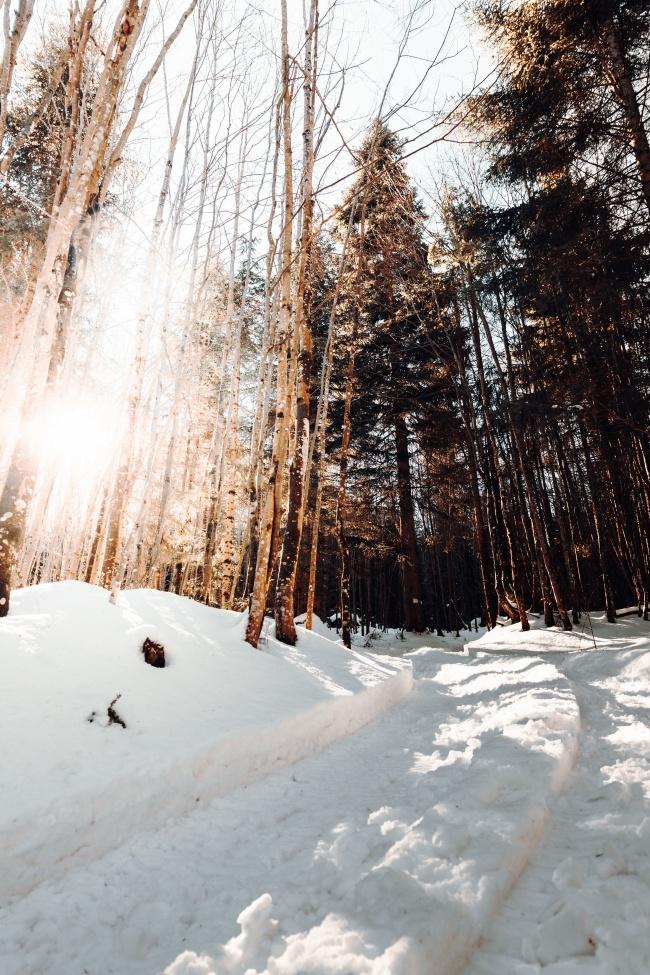 冬日树林雪景 冬日树林雪景大全图片素材