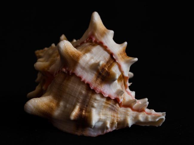 螺旋贝壳素材精美图片