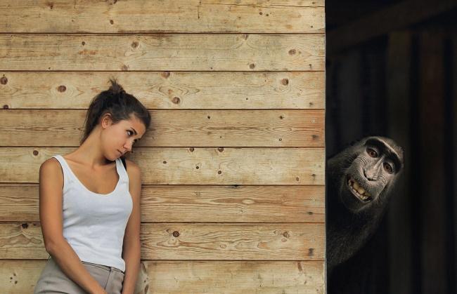 大猩猩和美女图片大全
