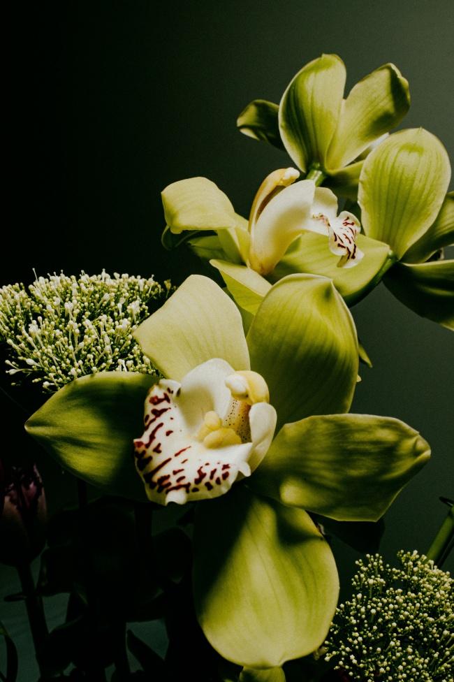 微距綠葉花卉精美圖片