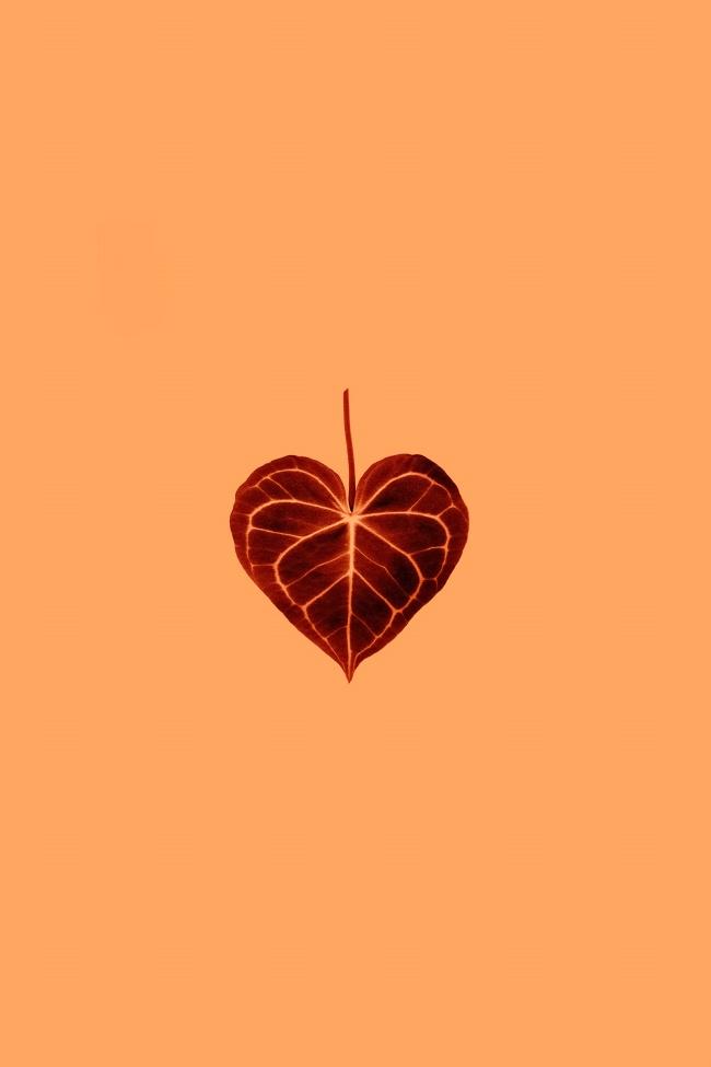 红色爱心树叶图片下载