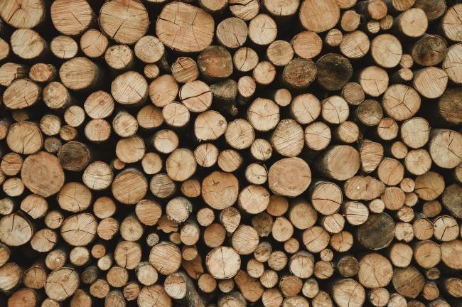 森林砍伐木材堆高清图片