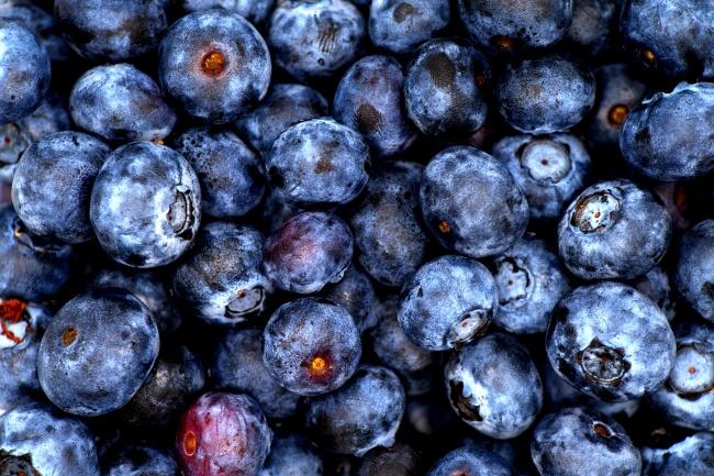 大颗蓝莓浆果图片