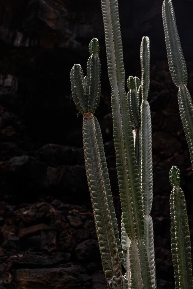 多刺仙人掌植物图片