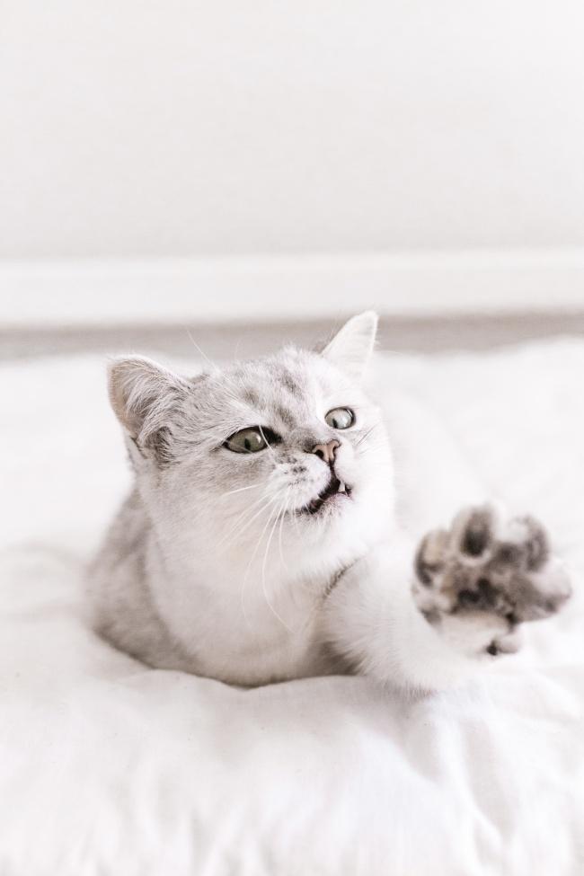 可爱小猫咪黑白写真图片大全