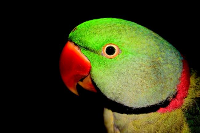 彩色鹦鹉头部特写图片大全