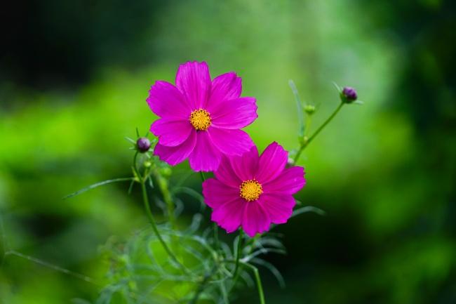 灿烂粉红色小花朵精美图片