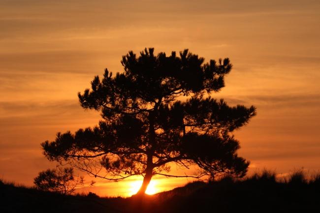 日出树木风景图片素材