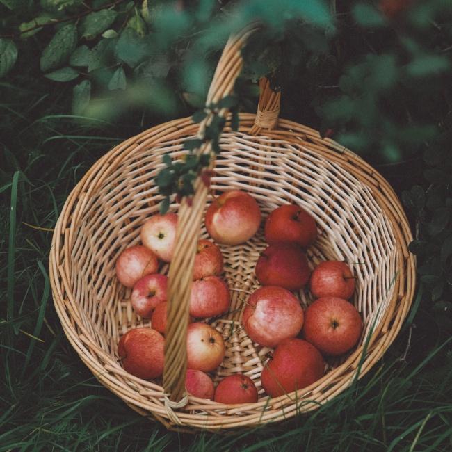 编织篮里的红苹果图片素材