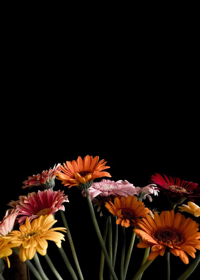 五颜六色菊花花枝图片大全