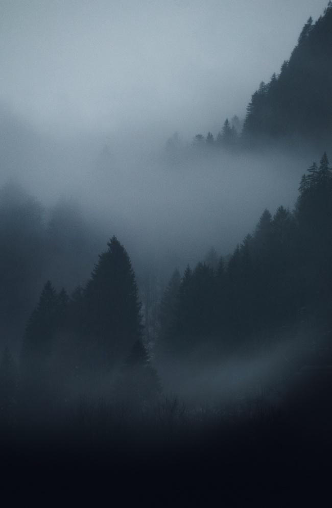 雾气朦胧原始森林图片大全