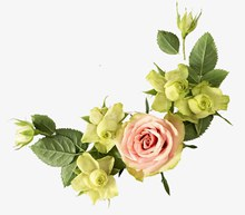 玫瑰花边psd分层素材