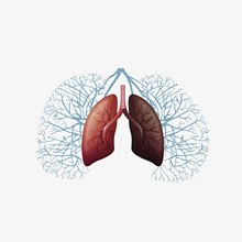 肺部插画psd图片