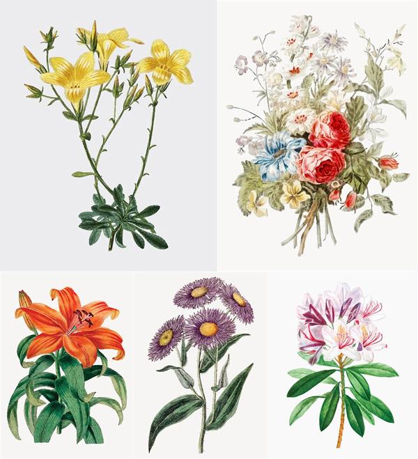 百合花与菊花等花卉植物主题图矢量图