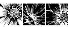 黑白花朵图案元素装饰挂画矢量图