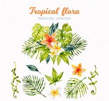 水彩绘热带花束设计矢量图片