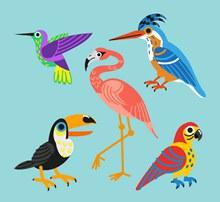 5款美丽鸟类设计矢量图下载