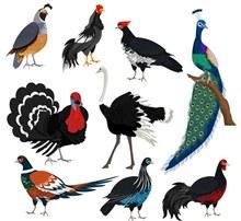 9款创意鸟类设计矢量图