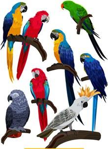 8款彩色鹦鹉设计矢量下载