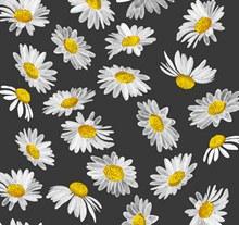 白色雏菊花朵无缝背景矢量图片