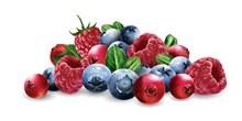新鲜水果果粒矢量素材
