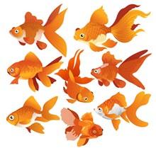 8款橙色金鱼设计矢量图