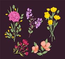 5款彩色盛开花卉矢量