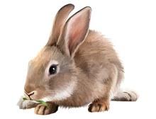 兔子矢量下载