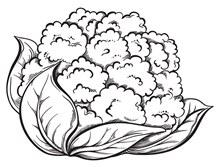 手绘花菜矢量素材