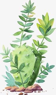 手绘水彩绿色仙人掌