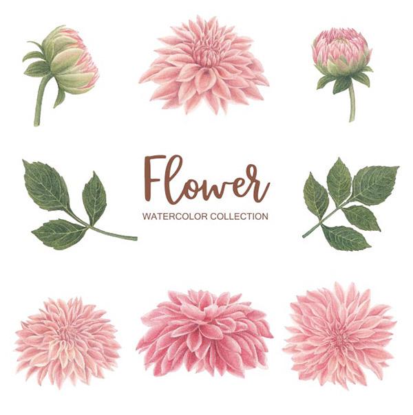 水彩粉红色花朵矢量素材下载