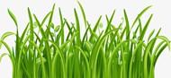 綠色的小草矢量圖